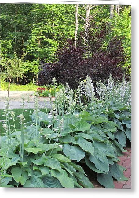 Gardens 111 Greeting Card by Patsy Pratt