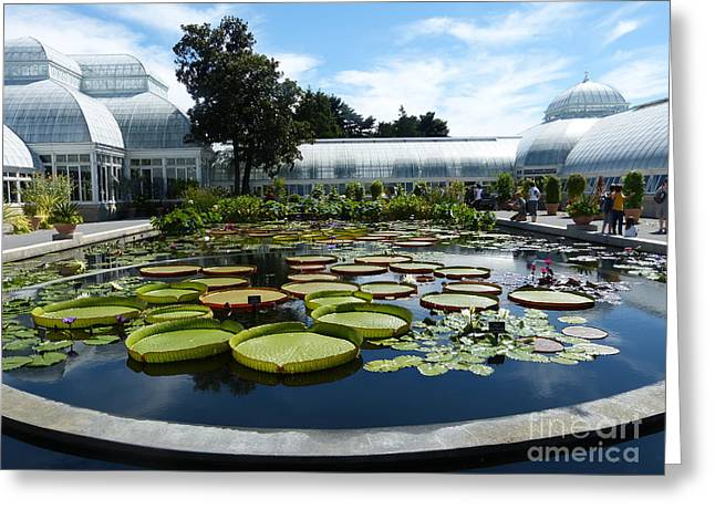 Pond Of Lilies Greeting Card