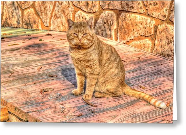 Garfield 01 Greeting Card