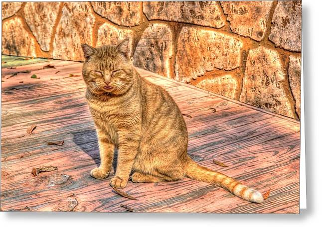 Garfield 02 Greeting Card