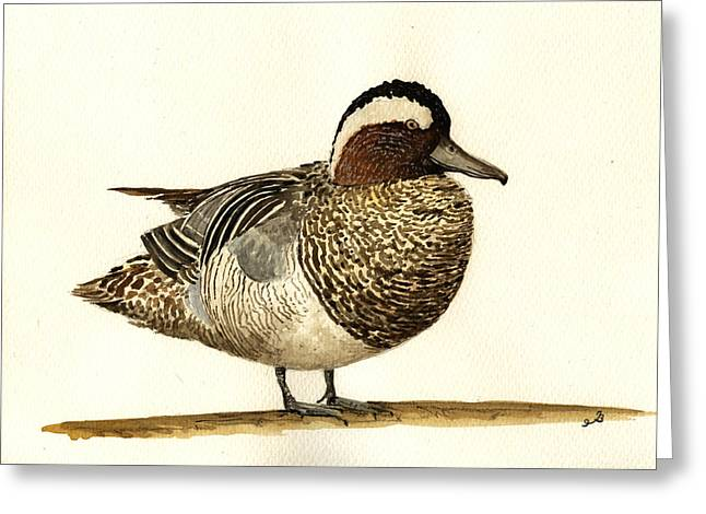 Garganey Duck Greeting Card