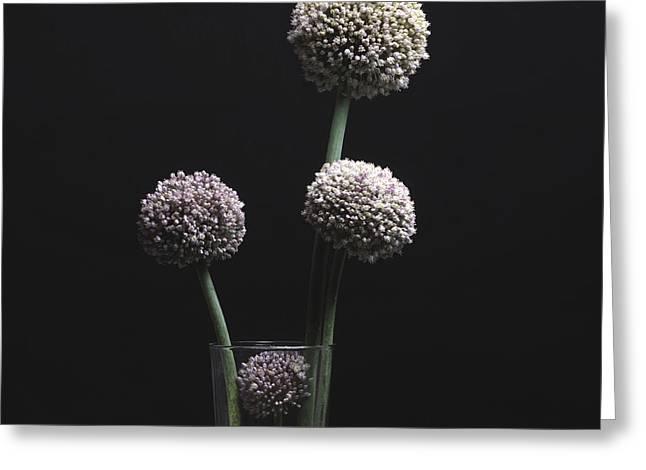 Garlic Flowers. Allium. Greeting Card