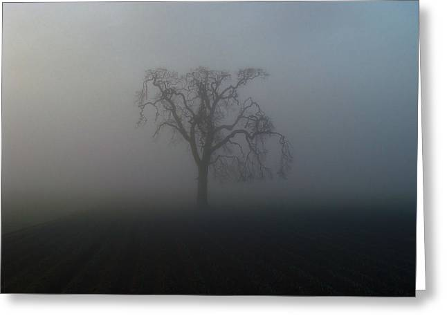 Greeting Card featuring the photograph Garry Oak In Fog by Cheryl Hoyle