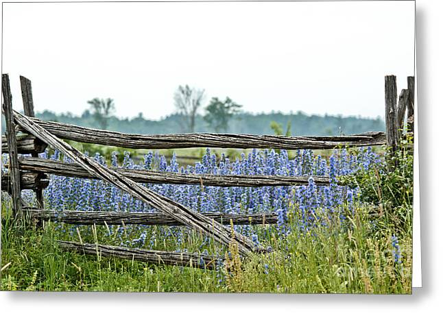 Gate To Blue Greeting Card by Cheryl Baxter