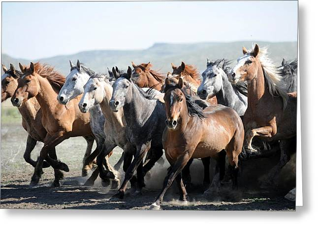 Gathering Horses Greeting Card by Lee Raine