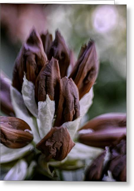 Gathering Greeting Card by Jean OKeeffe Macro Abundance Art