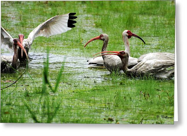 Gathering Of Ibis Greeting Card