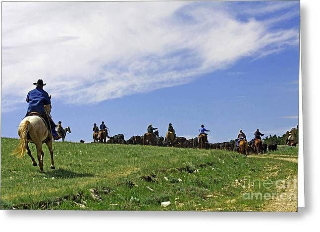 Gathering The Herd. Greeting Card