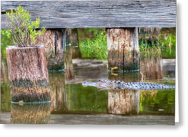 Gator At The Old Trestle Greeting Card