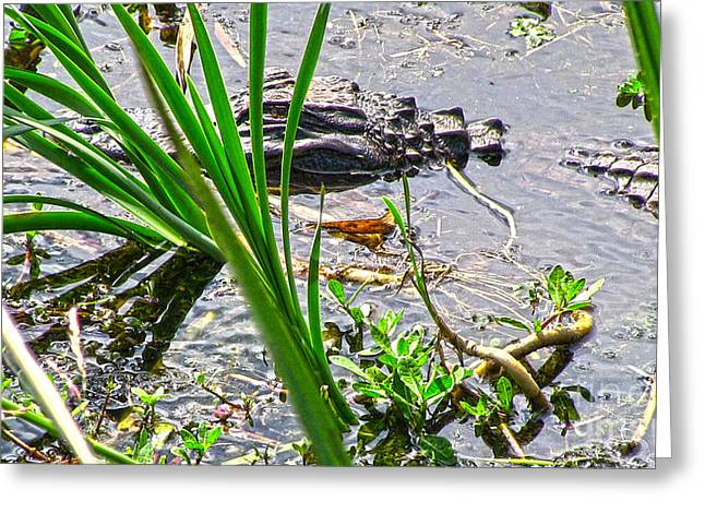 Gator Baby Greeting Card by D Wallace