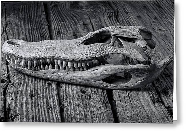 Gator Black And White Greeting Card by Garry Gay