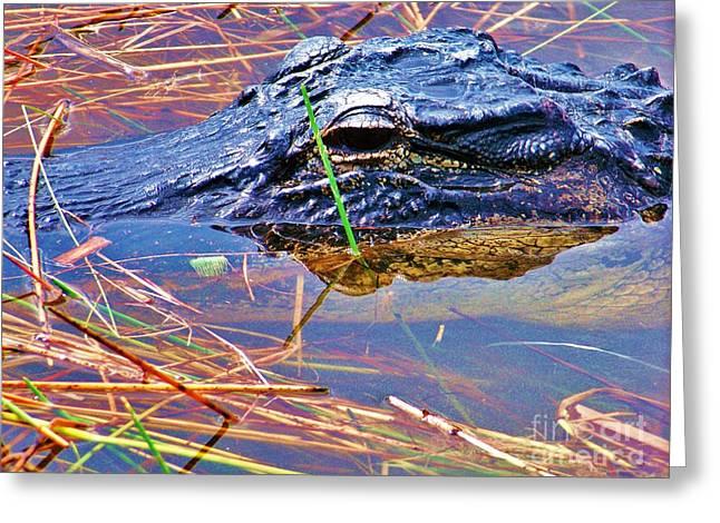 Gator Eye Greeting Card