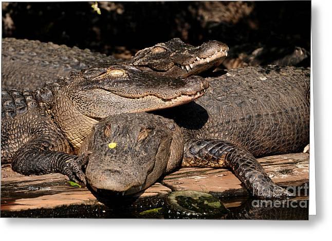 Gator Pals 1 Greeting Card by Sue Jarrett