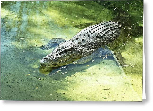 Gator Pond Greeting Card