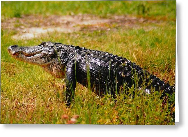 Gator Raid Greeting Card by Miles Stites