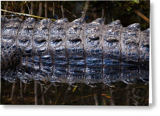 Gator Reflection Greeting Card by Adam Pender