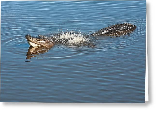 Gator Waves Greeting Card