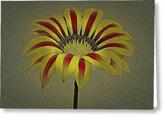 Gazania Flower Photographic Art Greeting Card by David Dehner