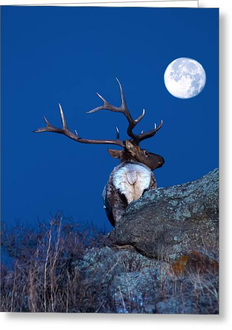 Gazing At The Moon Greeting Card by Shane Bechler