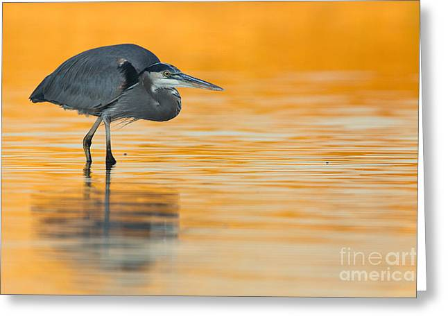 Greeting Card featuring the photograph Gbh In Orange Water by Bryan Keil