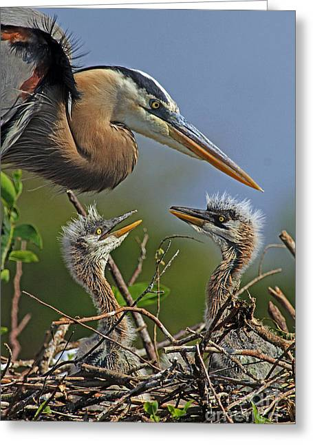 Great Blue Heron Twins Greeting Card