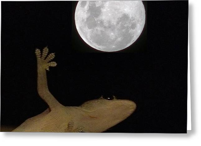 Gecko Moon Greeting Card by Cameron Bentley