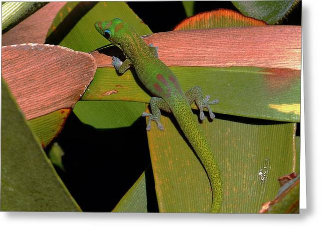 Gecko Greeting Card by Pamela Walton