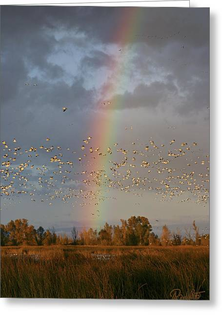 Geese And Rainbow Greeting Card