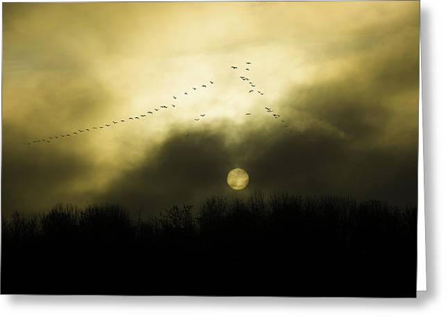 Geese At Sunset Greeting Card