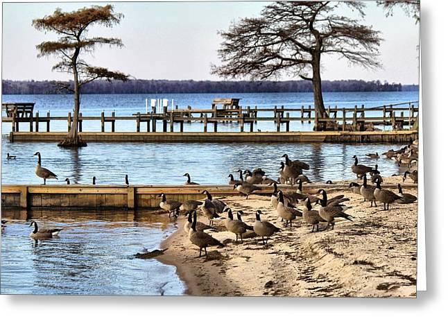 Geese Everywhere Greeting Card by Carolyn Ricks