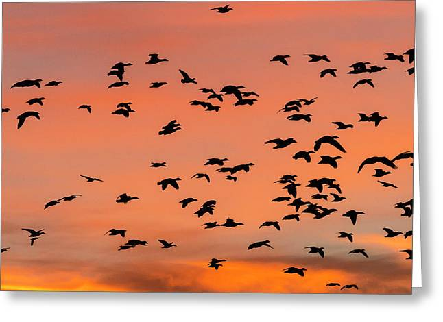 Geese Flying Before Dawn Greeting Card by Maresa Pryor