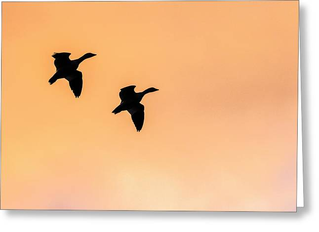 Geese Flying, Bosque Del Apache Greeting Card by Maresa Pryor