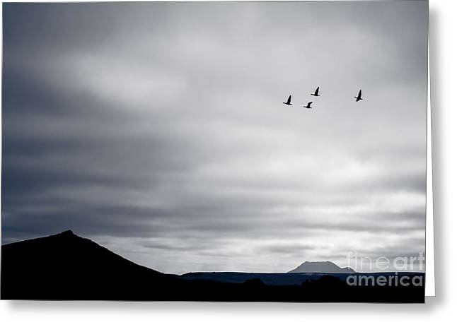 Greeting Card featuring the photograph Geese Flying South For Winter by Peta Thames