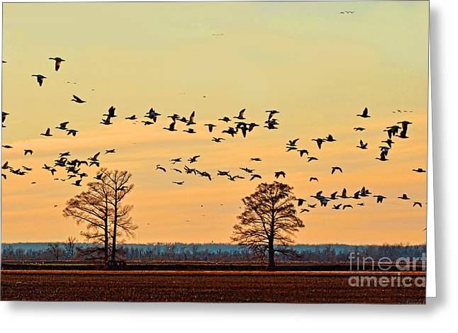 Geese In Flight I Greeting Card by Debbie Portwood