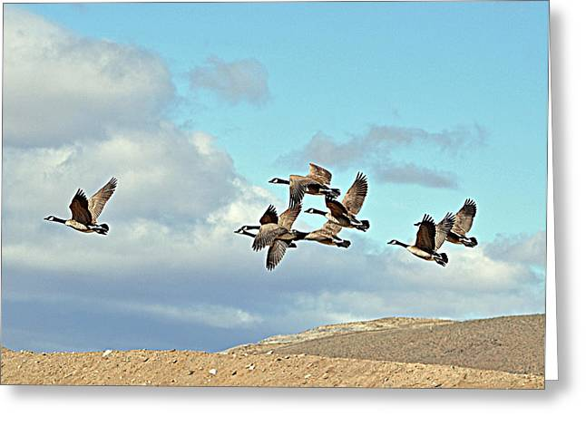 Greeting Card featuring the photograph Geese In Flight by Lula Adams