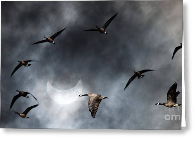 Geese In Solar Eclips Greeting Card by Rebecca Cozart