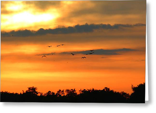 Geese Into The Sunset Greeting Card