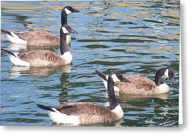 Geese  Greeting Card by Julie Grace