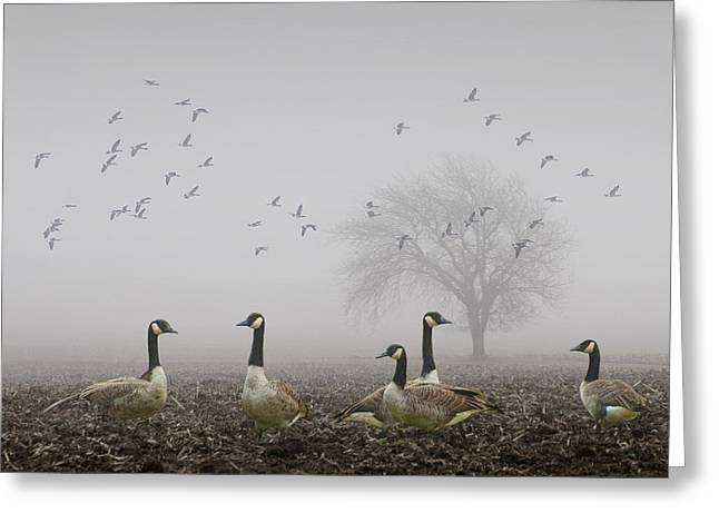 Geese On A Foggy Morning Greeting Card by Randall Nyhof