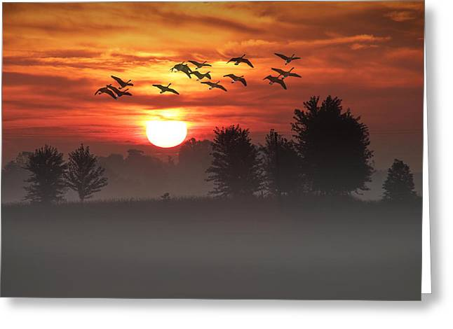 Geese On A Foggy Morning Sunrise Greeting Card by Randall Nyhof