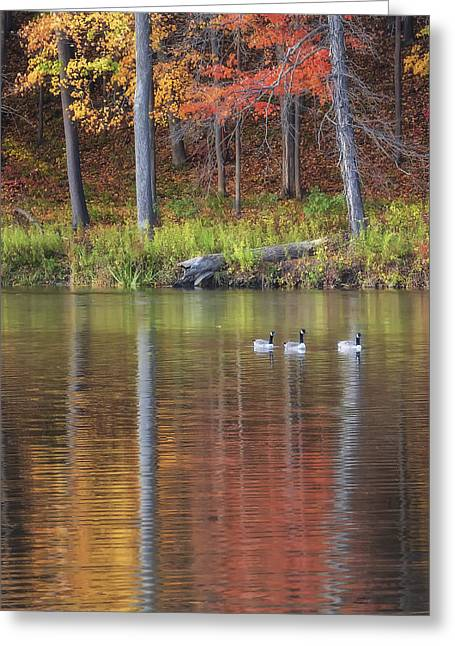 Geese On Beebe Lake Greeting Card by Michele Steffey