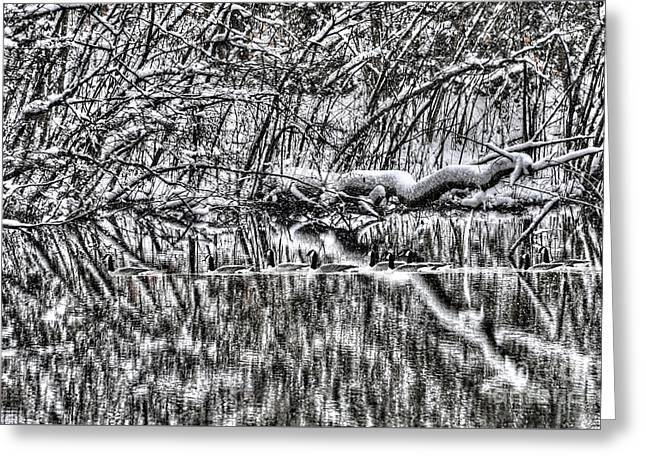 Geese On Pond Black And Wihite Greeting Card by Dan Friend
