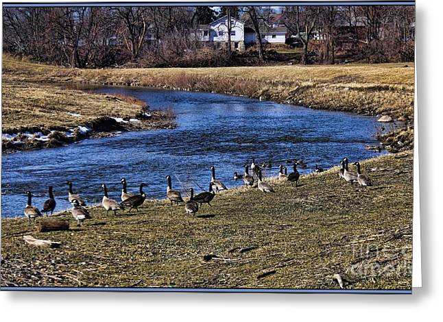 Geese On The Creek Greeting Card
