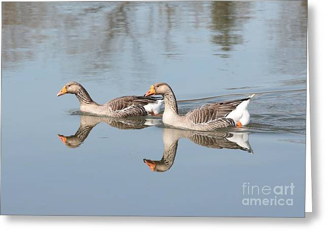 Geese On The Yakima River  Greeting Card by Carol Groenen