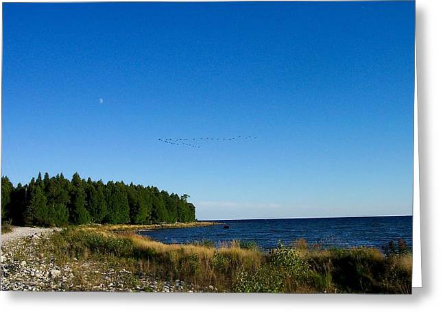 Geese Over Cana Island Greeting Card by Pamela Schreckengost
