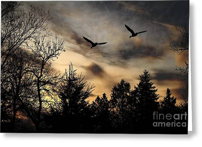 Greeting Card featuring the photograph Geese Silhouette by Marjorie Imbeau