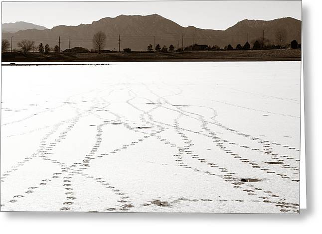 Geese Tracks In Winter Greeting Card by Marilyn Hunt