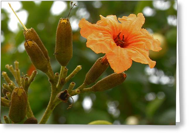 Geiger Tree - Geiger Flower Greeting Card by Greg Thiemeyer