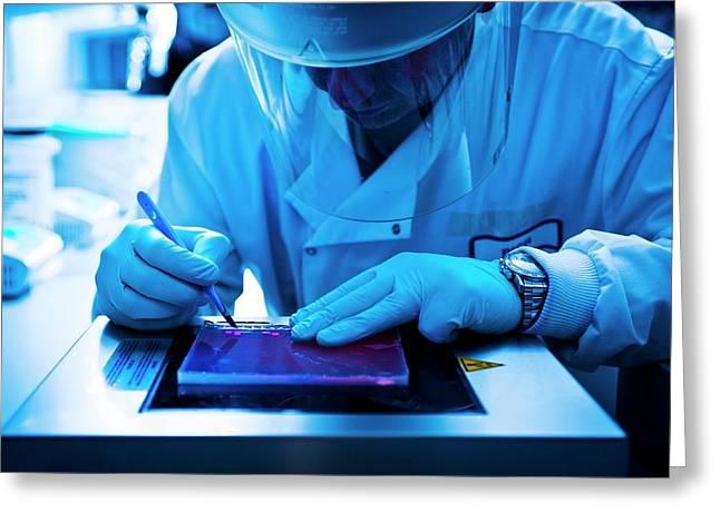 Gel Electrophoresis Greeting Card by Dan Dunkley