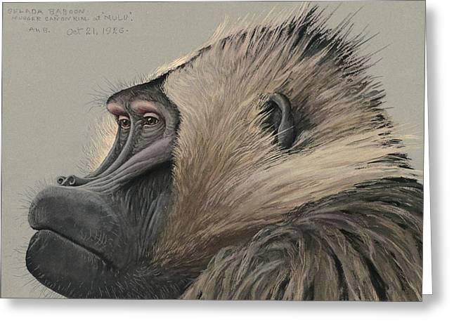 Gelada Baboon Greeting Card by Rob Dreyer